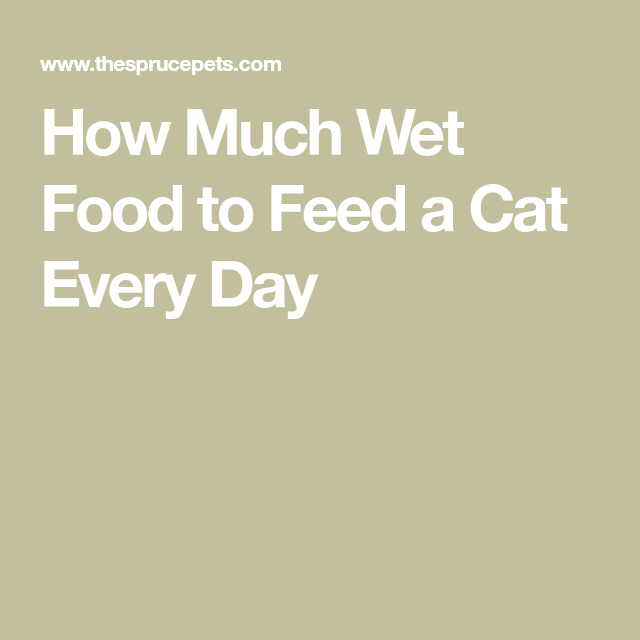 How Much Wet Food Does a Cat Need Every Day? in 2020 (With