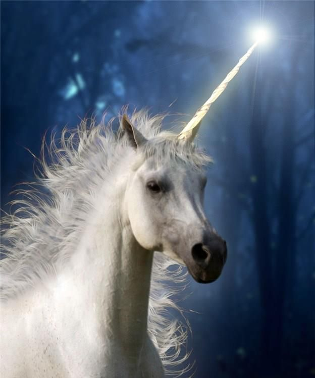 Unicorns carry Divine-Light consciousness and can help us feel more peaceful, when we call upon their loving energy. ♥