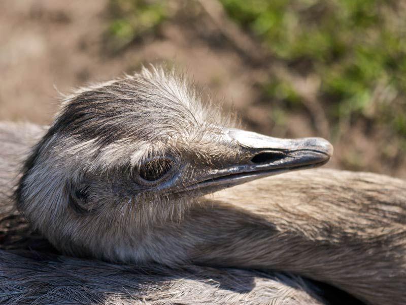 Emu Mobili ~ Pin by pamela levy on patagonia emu
