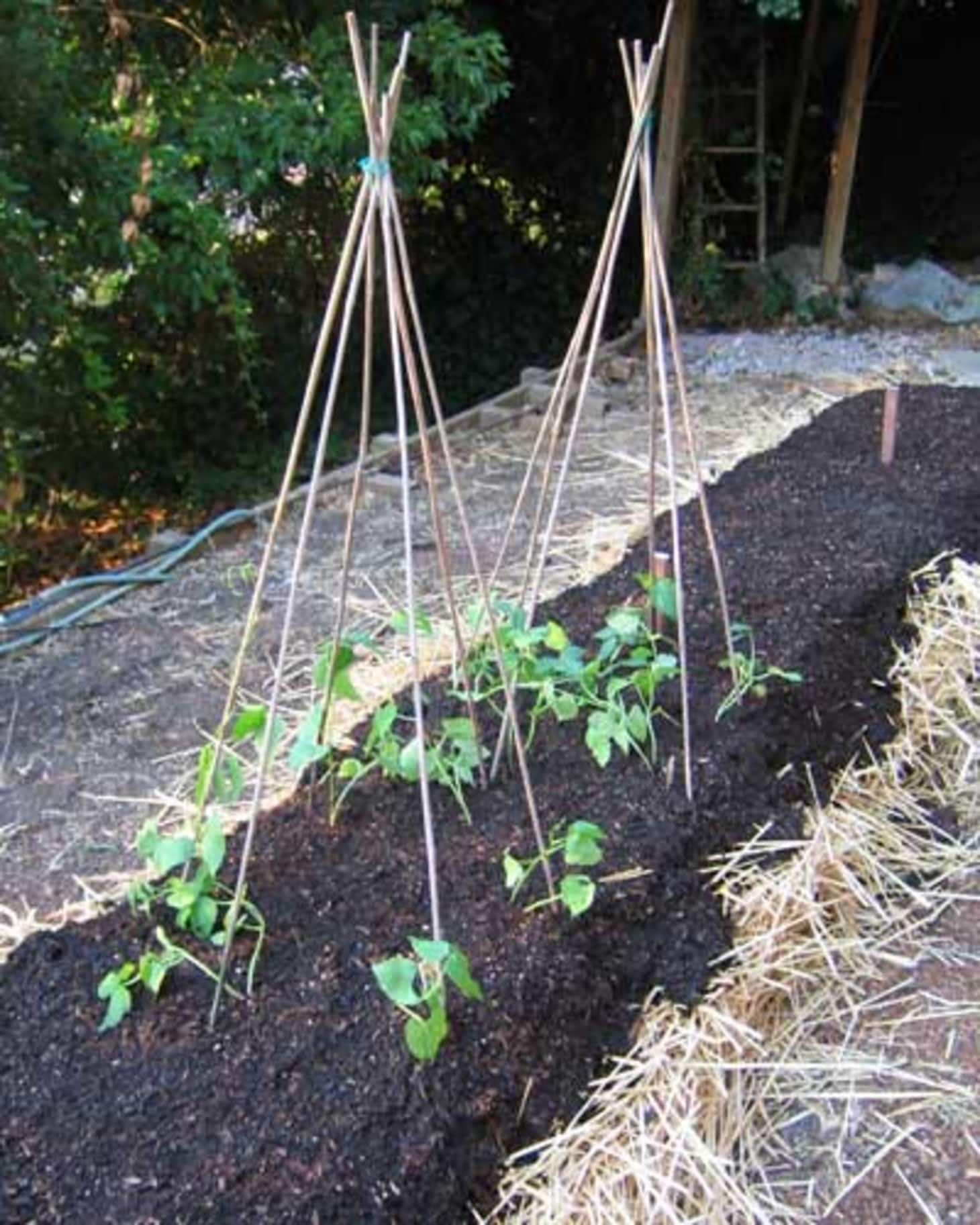 How To Start a NoDig Garden … Step by Step Dig gardens