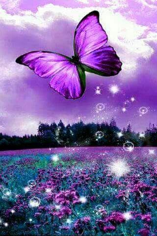 So Pretty Purple Butterfly Wallpaper Butterfly Pictures Butterfly Wallpaper
