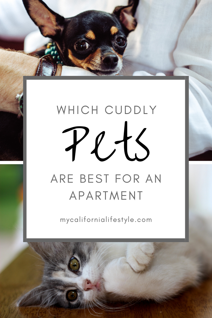 Best Cuddly Pets For A Small Apartment Cuddly Animals Apartment Pet Best Small Pets