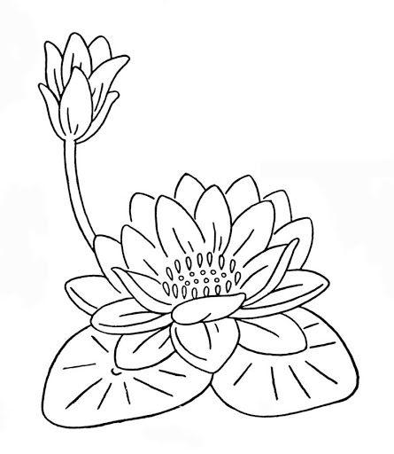 Flor De Loto E Lili Para Pintar E Imprimir Dibujos Ideas