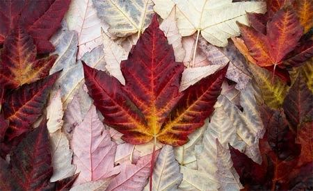 Ventos contrários: Canadá dá sinais de abandono da defesa ambiental