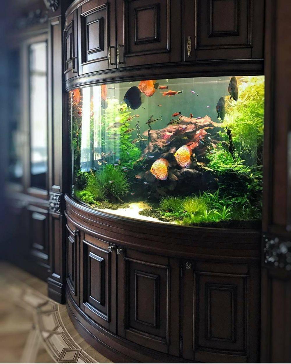 15 Stunning Aquarium Design Ideas For Indoor Decorations Maison Design