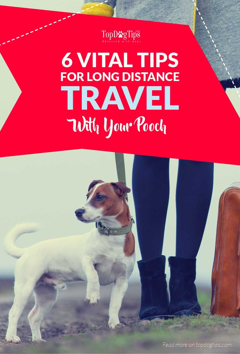 6 Important Tips for Long Distance Traveling with Your Dog
