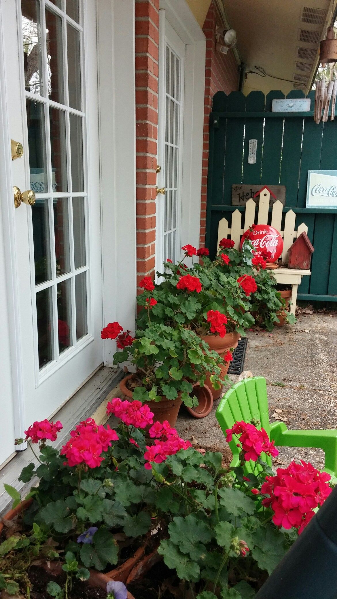 Blooming Geraniums In The Spring Potted Flowers And Flower Beds