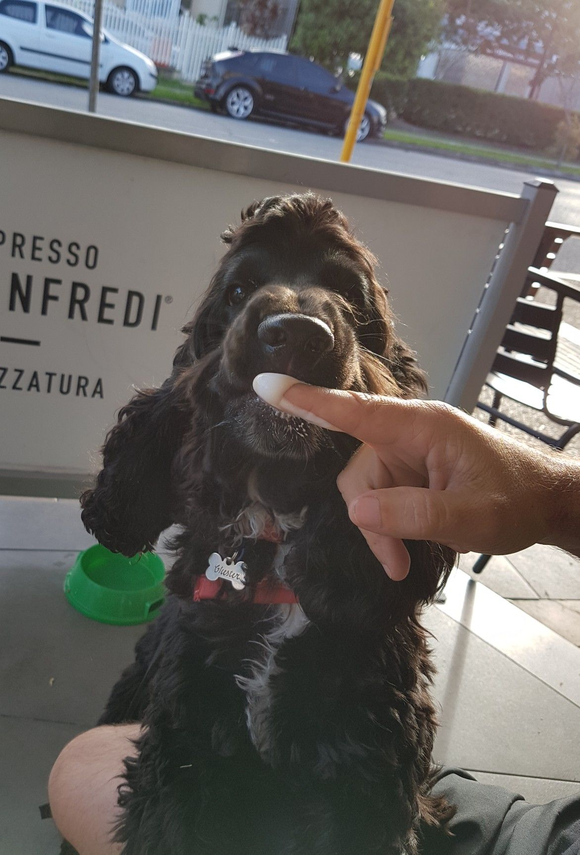 Chester Loves His Lactose Free Milk Froth