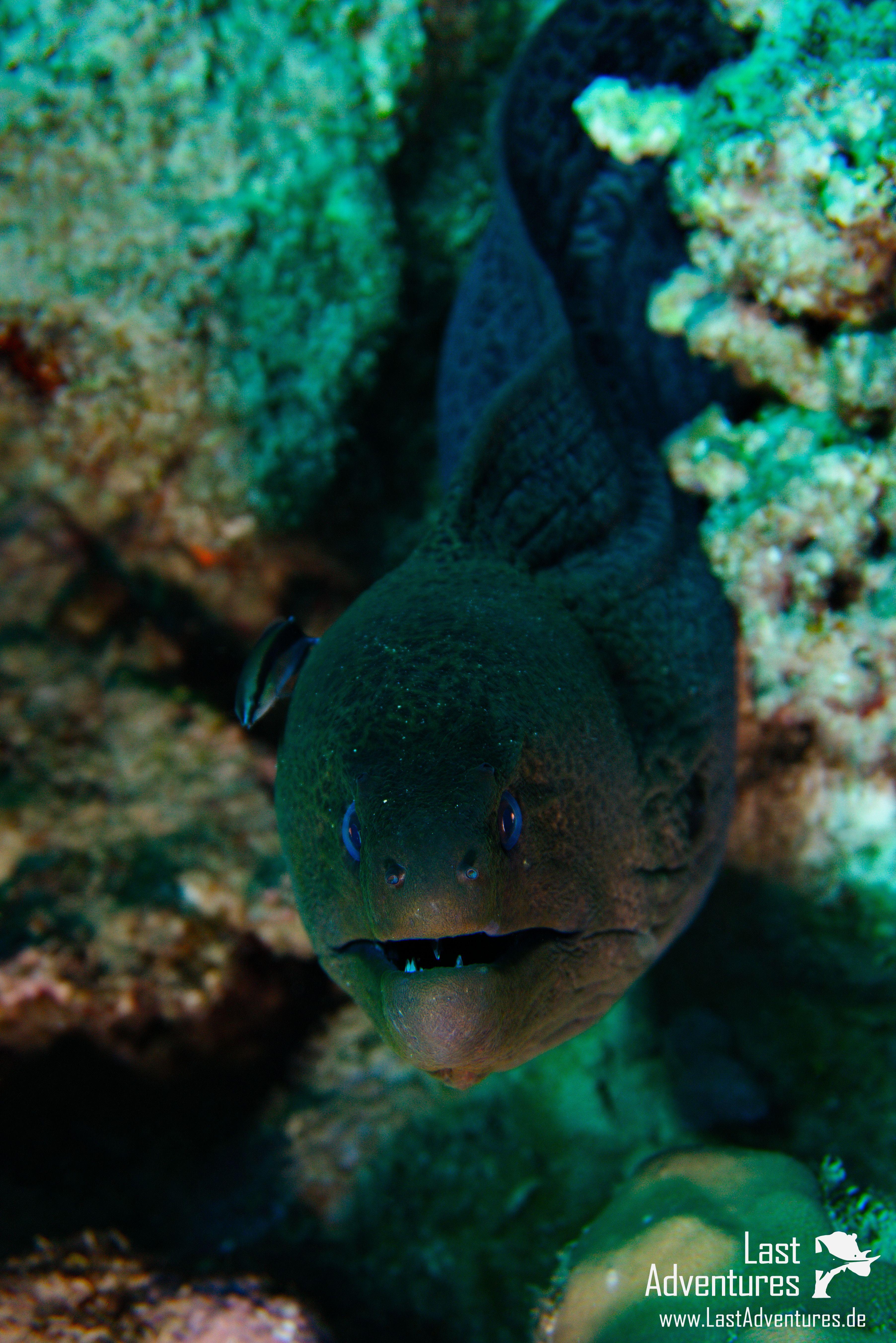 Moräne fotografiert in Ägypten #Moräne #fisch #fish #fische #schwarm ...
