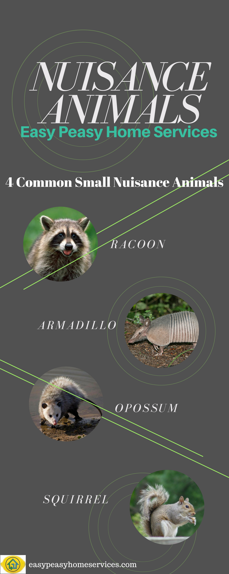 Four common small nuisance animals you may find around