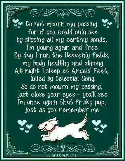 For A Loss Of One S Beloved Dog
