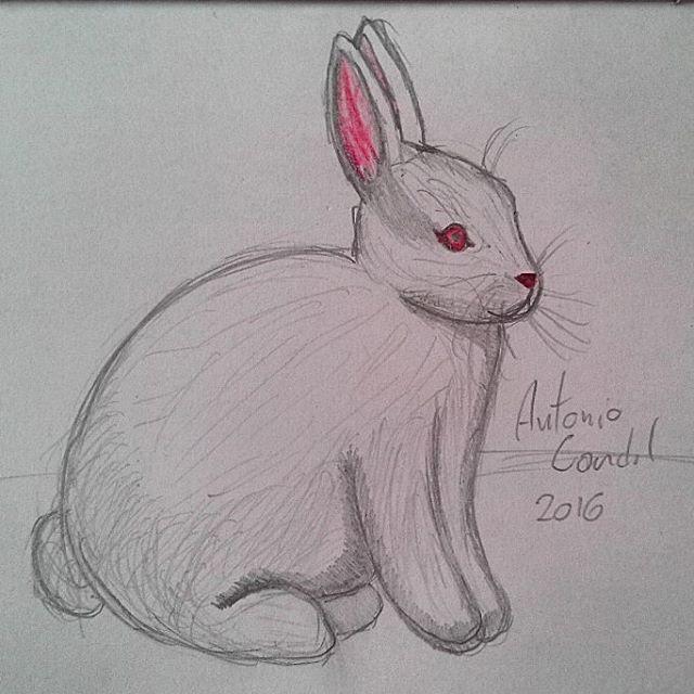 #illustration #ilustração #sketch #sketchbook #draw #drawing #desenho #coelho #rabbit