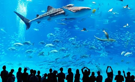 The Fish Tank That S So Big It Can Hold Four Whale Sharks