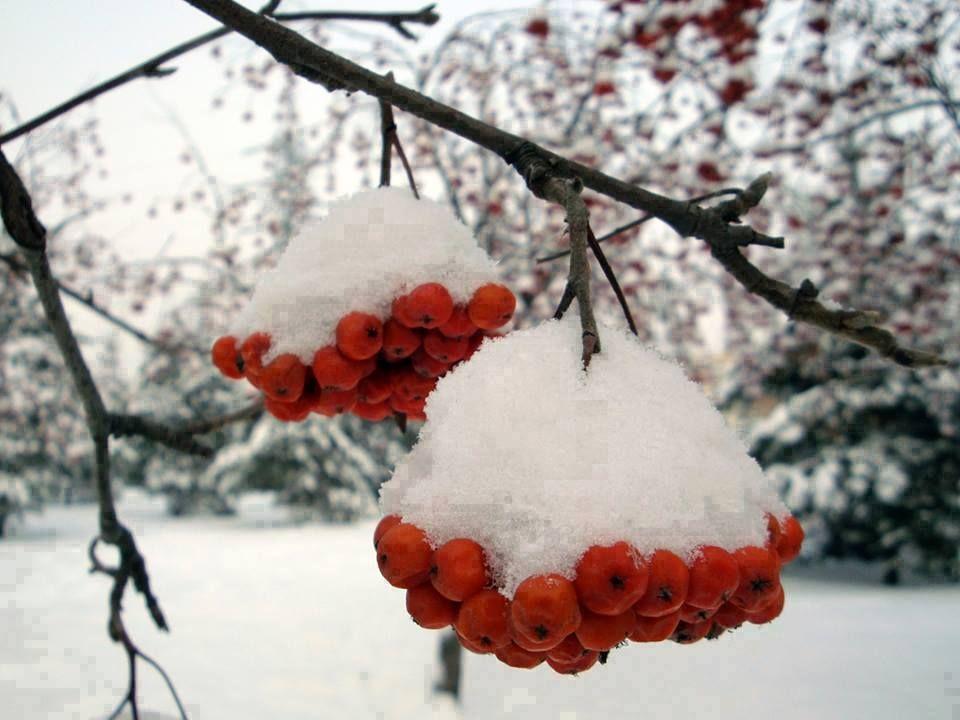 57. hiver