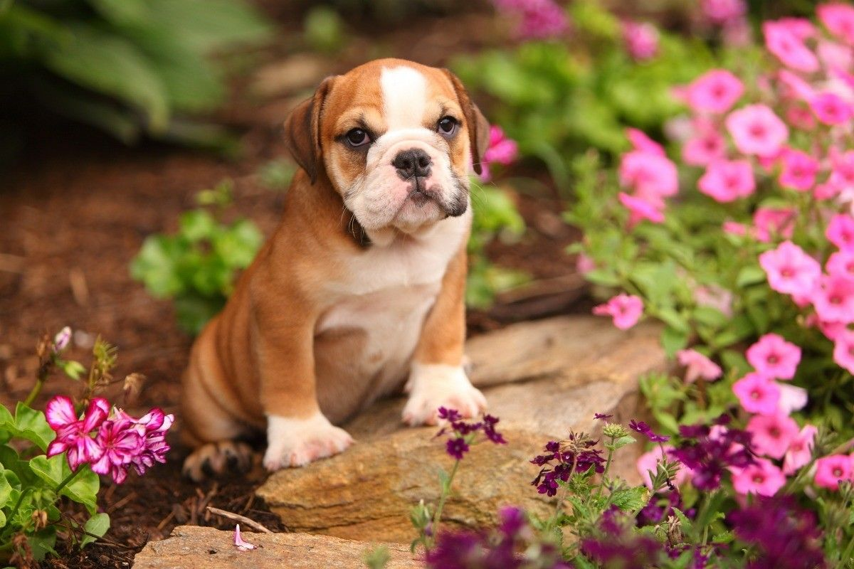Keeping Dogs from Peeing in Flower Beds Flower beds
