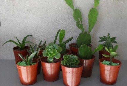 plantas suculentas cuidados - Buscar con Google   HABLALES BONITO ...