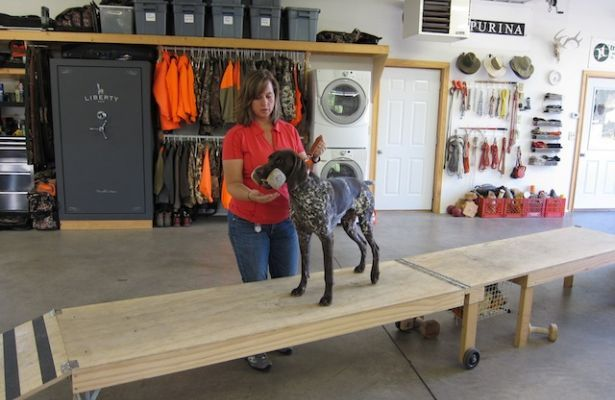 Force Fetch Tables Google Search Dog Dogs Dog
