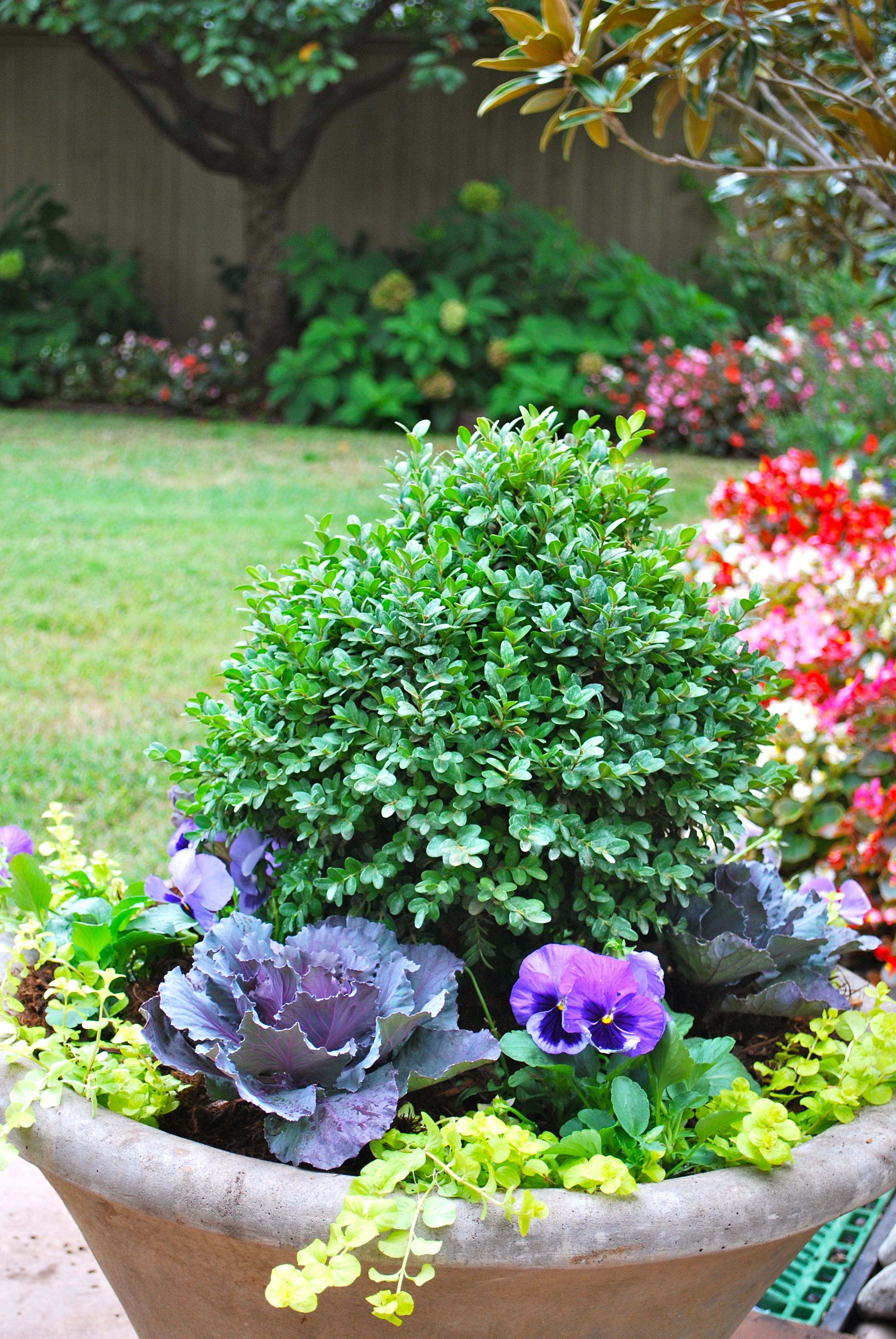 containergardening #curbappeal #containergardens #gardening ...