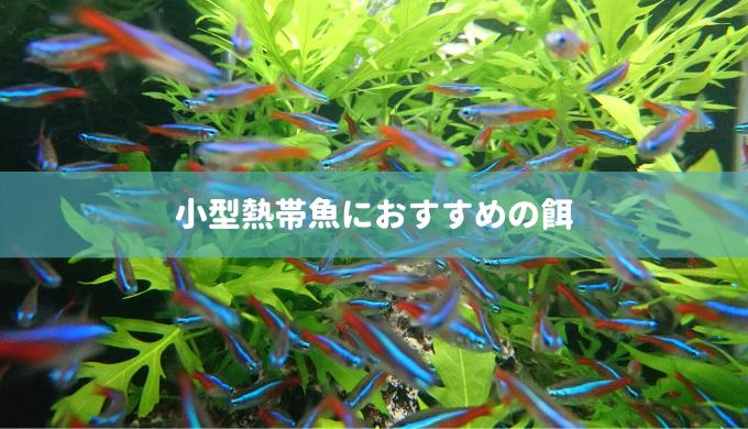 小型熱帯魚におすすめの餌 ラスボラ 熱帯魚 おすすめ