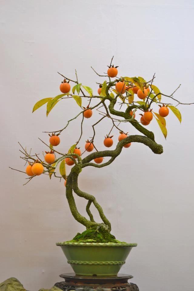 how to make bonsai orange tree