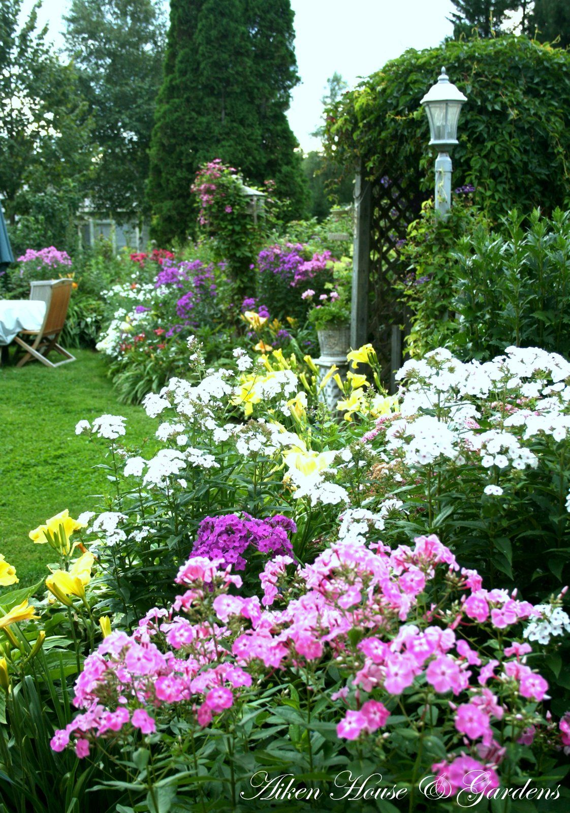 Border of phlox. This is my most successful, longest ...