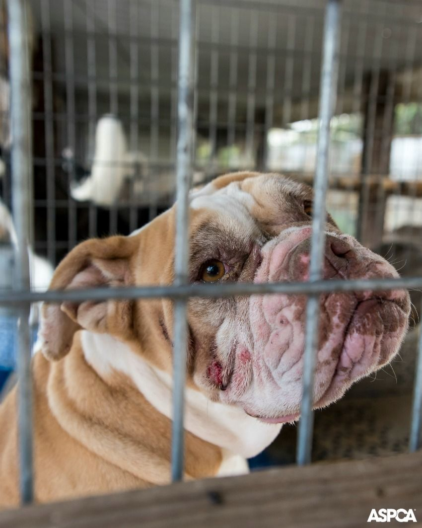 Ways To Give Puppy Mills Puppies Puppy Mill Rescue