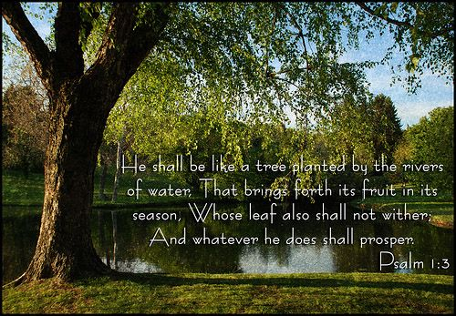 Pictures Of Trees Planted By Rivers Waters And He Shall