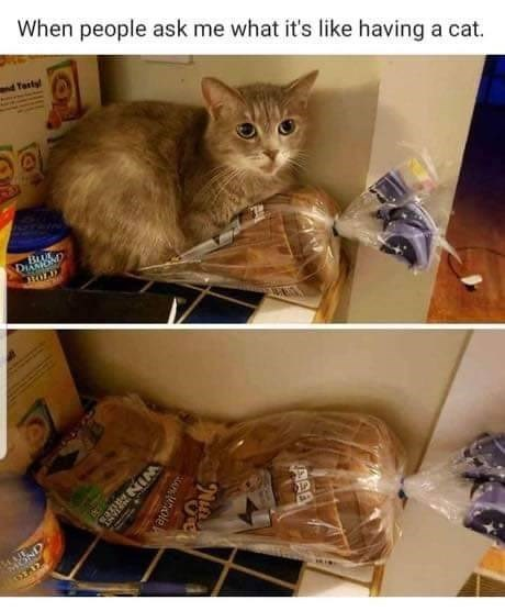 Todays Top Cat Pics To Get The Week Moving 21 Pics I Can Has Cheezburger Cats Are Jerks Funny Cats Compil Animal Memes Funny Animals Funny Animal Memes