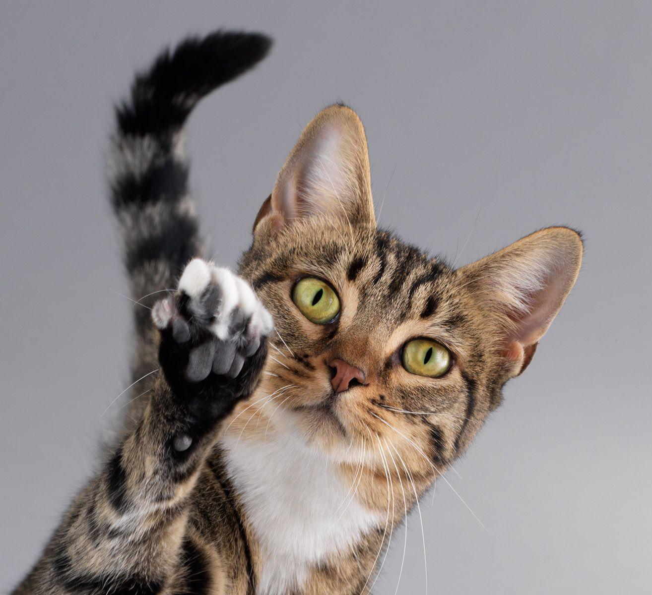 Открытка картинки, прикольные картинки котами фото