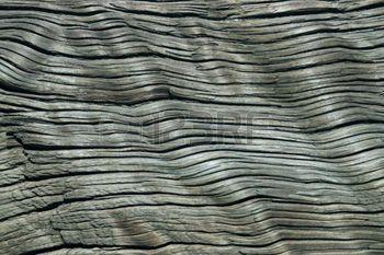 burl wood: Grau Struktur der alten Holz mit einer beträchtlichen Menge von Rissen