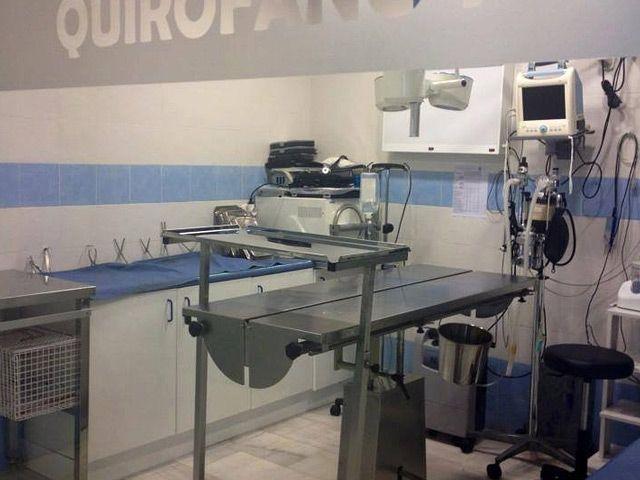 Clinica Veterinaria Zarpas Y Bigotes Peluquerias Caninas En