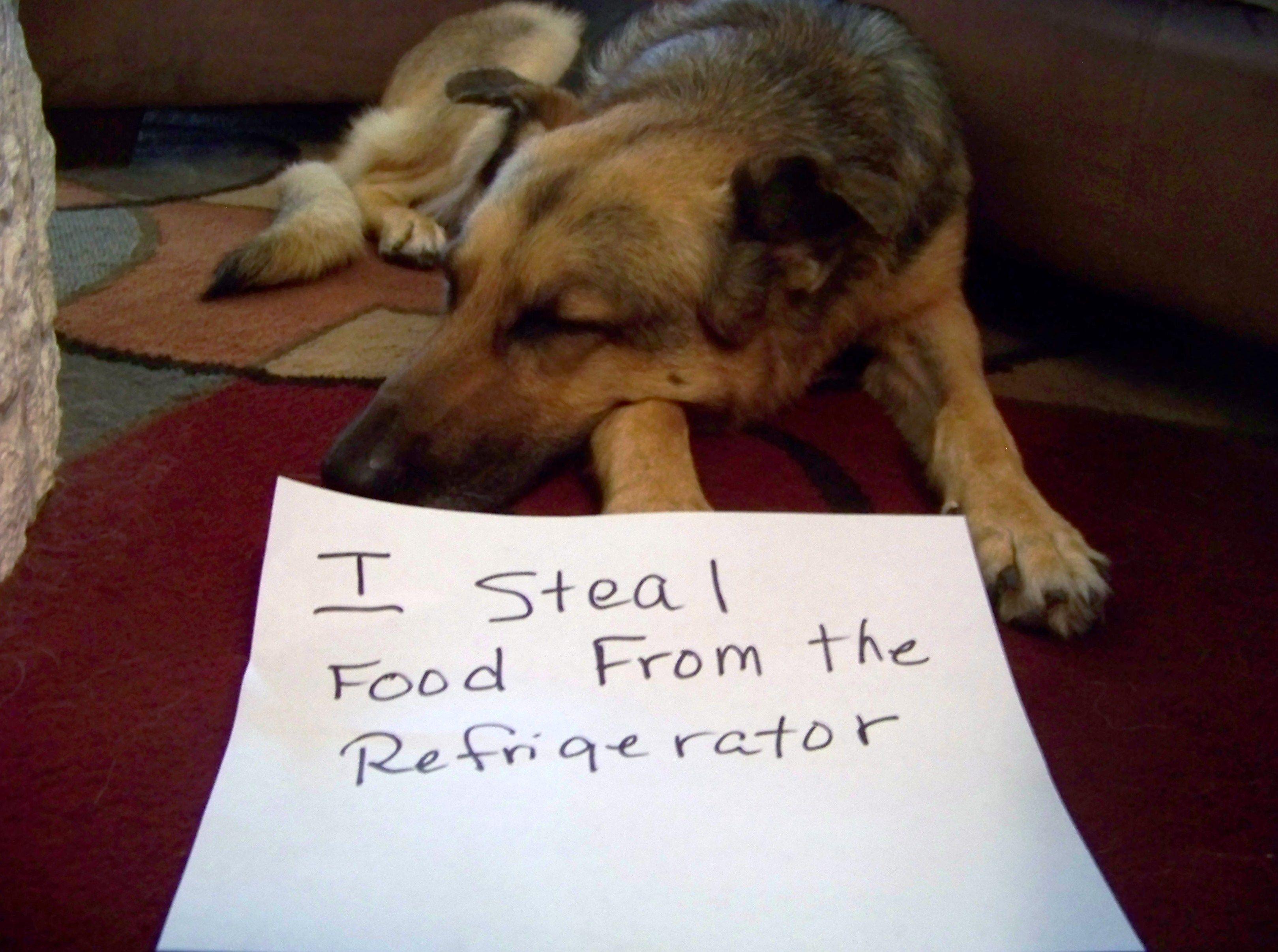 LOL Dog shaming!