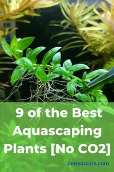 Aquascaping is the act of creating underwater art. This article reviews which live plants are best for low tech aquascapes and easy to maintain planted tanks.