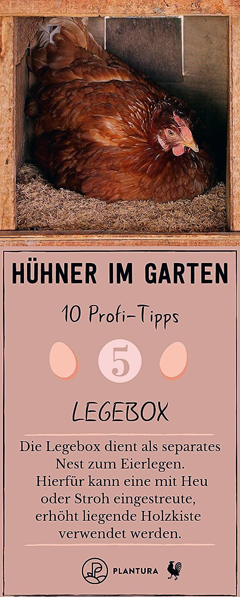 Hühner im Garten: 10 Profi-Tipps zur richtigen Haltung - Plantura