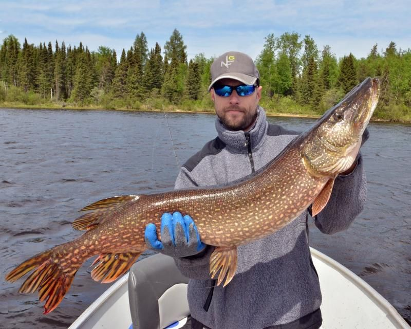 Pin By Jackson S Lodge Outpost On Pike Fishing Fishing Lodge Pike Fishing Hunting Trip