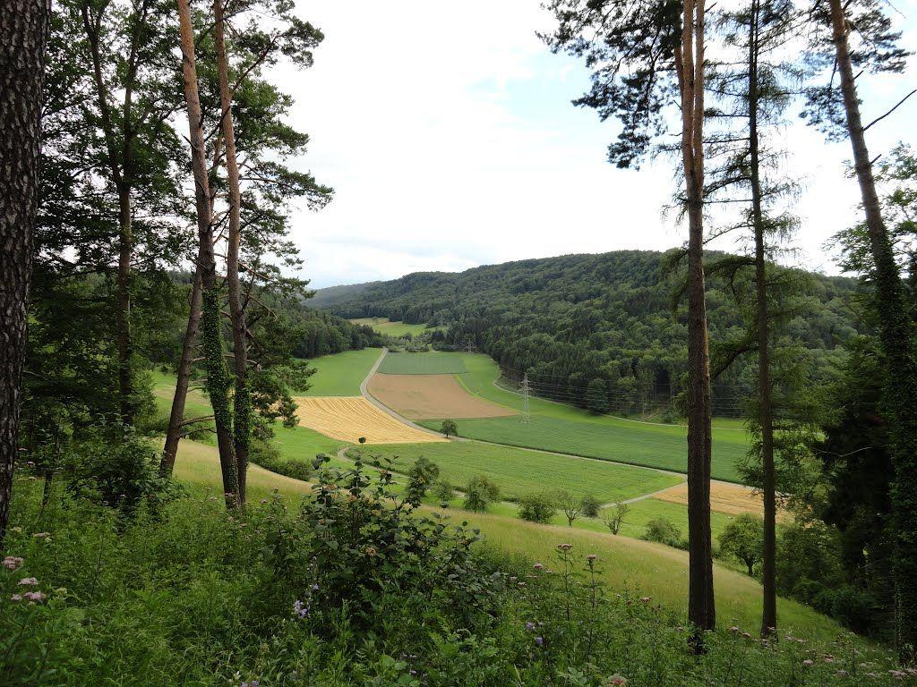 Ausblick vom Hoh Wülflingen auf Dättnau