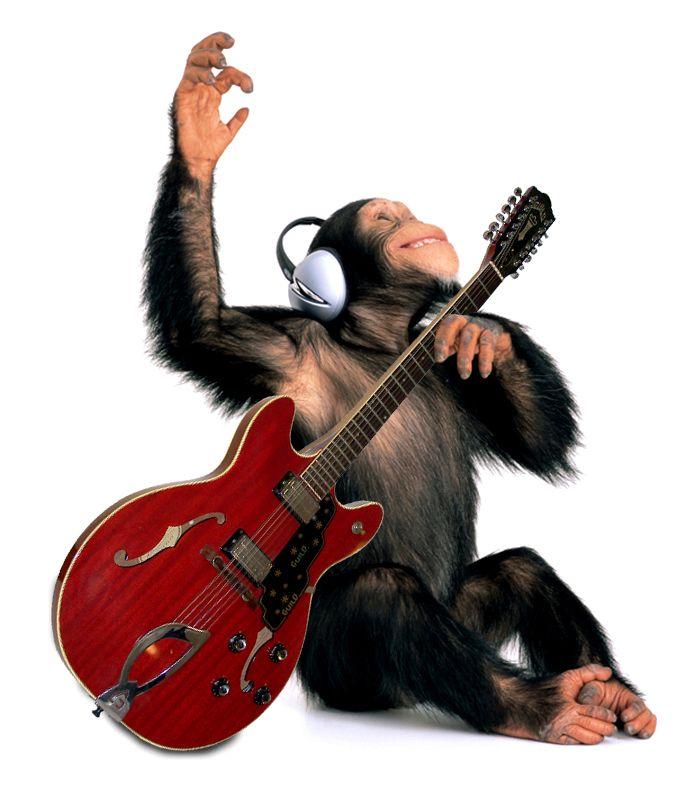 Прикольные, смешная картинка о музыкальных инструментах