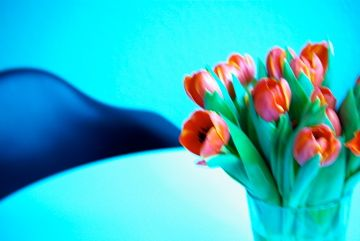 Ah tulips