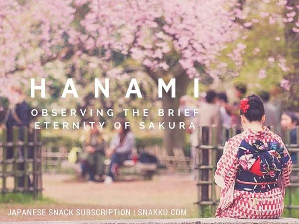 Hanami Observing The Brief Eternity Of Cherry Blossoms
