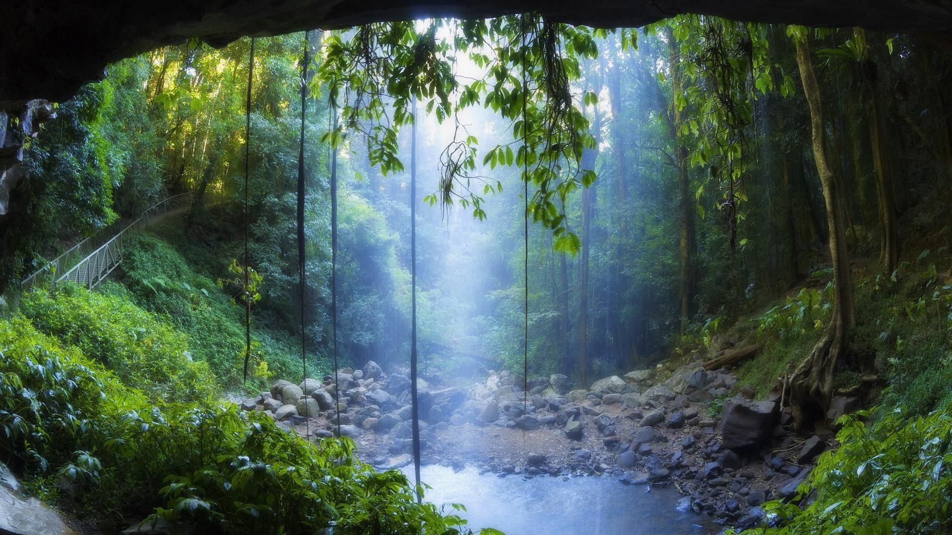 Rain Forest Wallpapers National Parks Scenery New South Wales