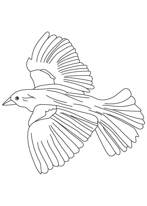 Flying blackbird coloring page coloring 3 Pinterest