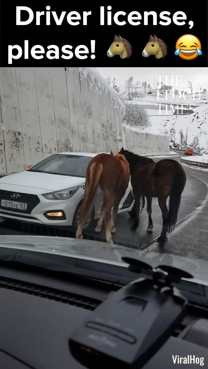 Tun Sie das niemals, sie hat Glück, aber wenn Sie ein Pferd berühren, das hinten ist, k ... - #beruhren #gluck #hinten #niemals #pferd