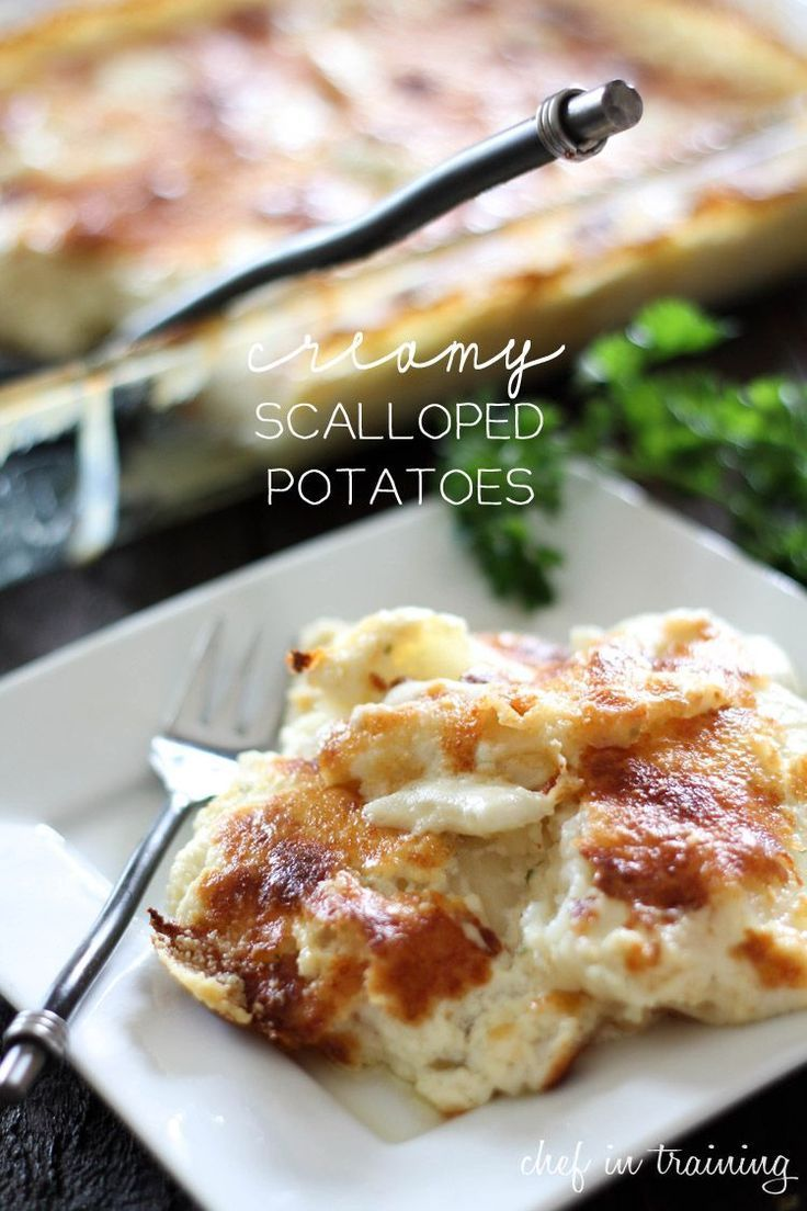 Scalloped Potatoes... These potatoes on chef-in- outshine any... Creamy Scalloped Potatoes... These potatoes on chef-in- outshine any... Creamy Scalloped Potatoes... These potatoes on chef-in- outshine any...