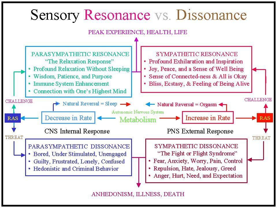 Autonomic Nervous System Function Google Search Body Exploration