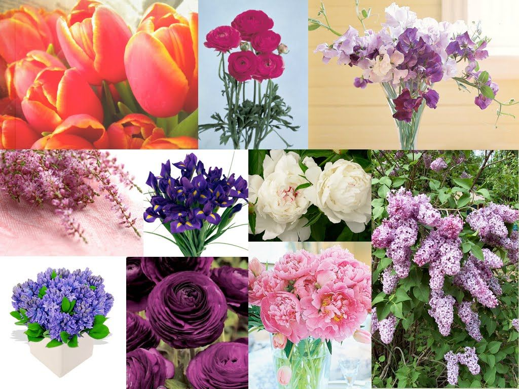 Pictures of flower names google search flower posts pictures of flower names google search dhlflorist Image collections
