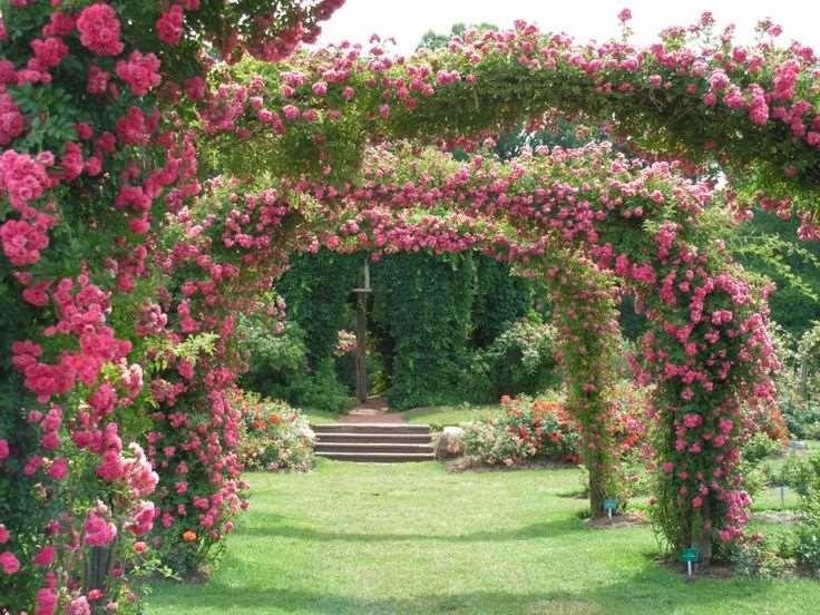 Plantas trepadoras con flores para mejorar tu p rgola o - Plantas trepadoras para pergolas ...
