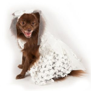 Top Paw Wedding Dress W Veil Clothing Accessories Dog Petsmart Wedding Dress With Veil Dog Wedding Dress Wedding Pets