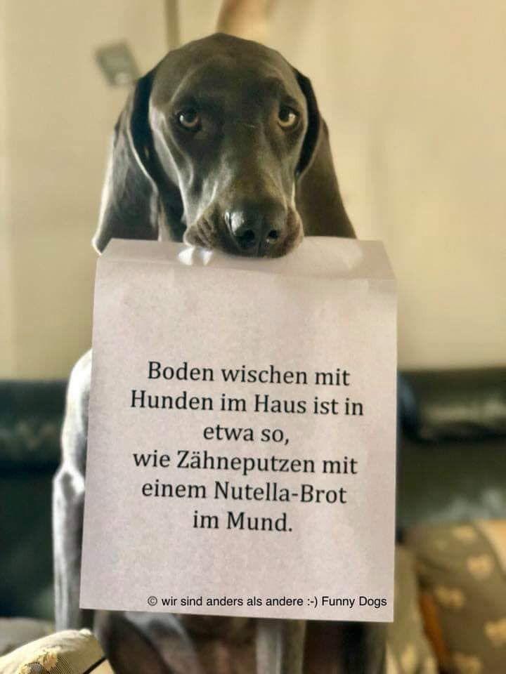 Lustig sprüche hunde Hundesprüche: Top