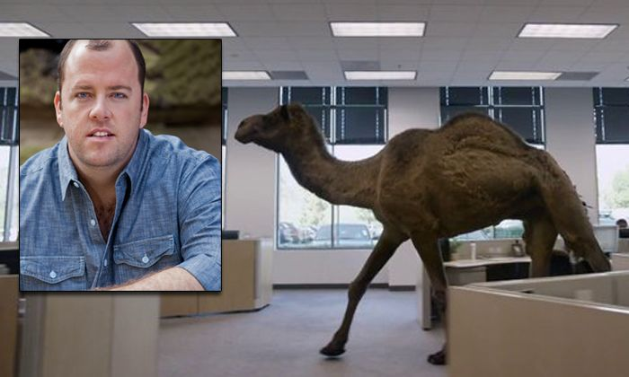 who u2019s the voice of the camel in the geico  u2018hump day