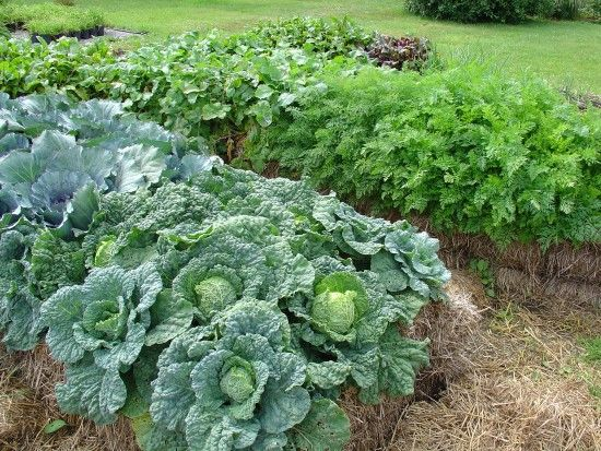 How to grow your best vegetable garden yet, directly in a straw bale! #veggiegardens